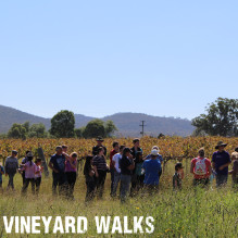 Vineyard Walk:Vine Talk