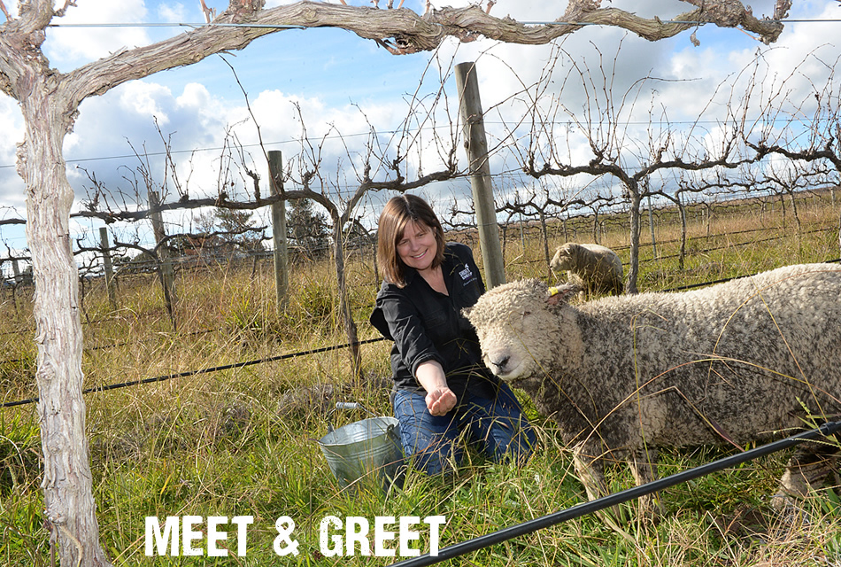 Meet & Greet the short sheep!